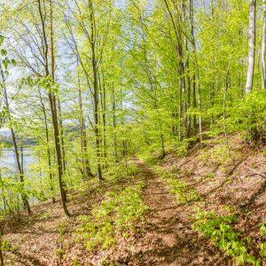 Les pod Kraľovianskou kopou